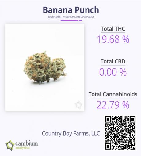 Banana Punch CAM